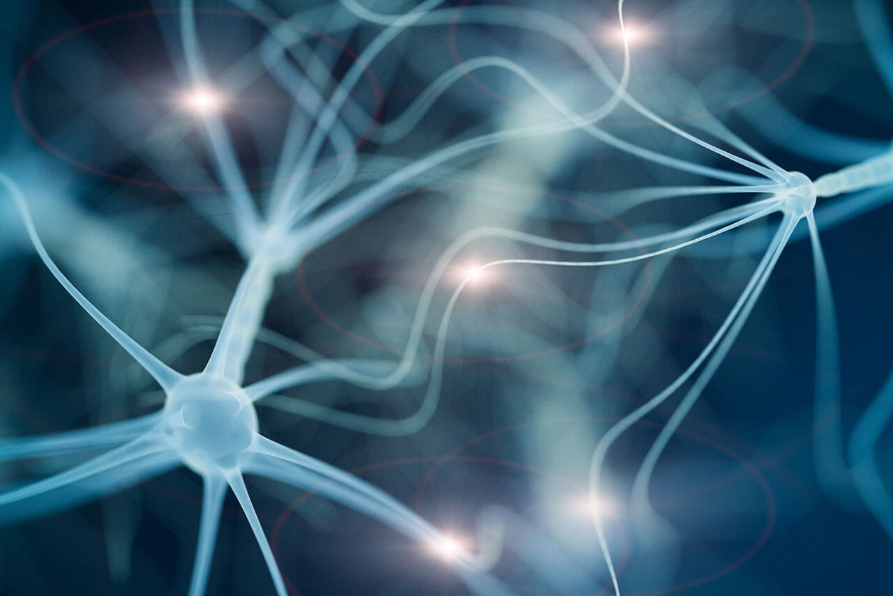 image of cells in the nervous system, illustrating some of the system that benfotiamine benefits