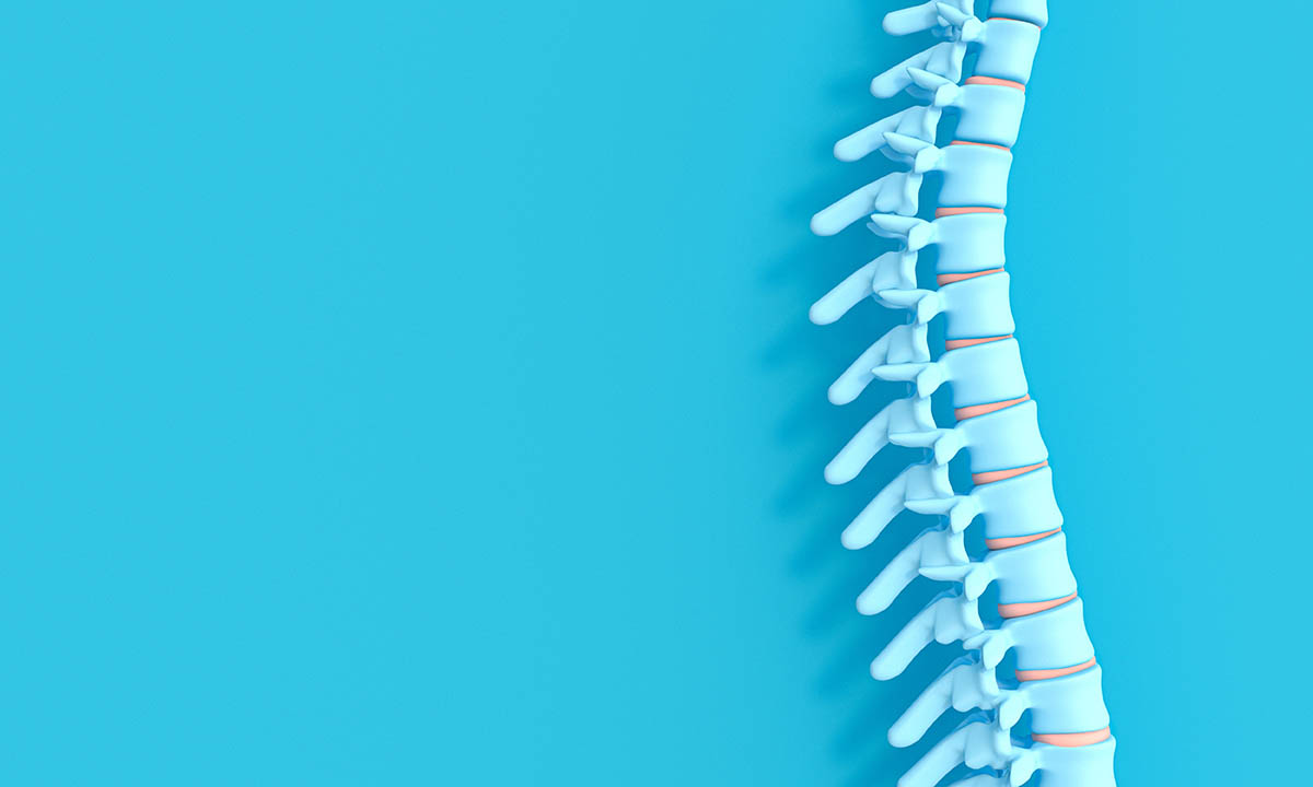 3d render image of a spine, which requires vitamins for healthy bones, on a blue background